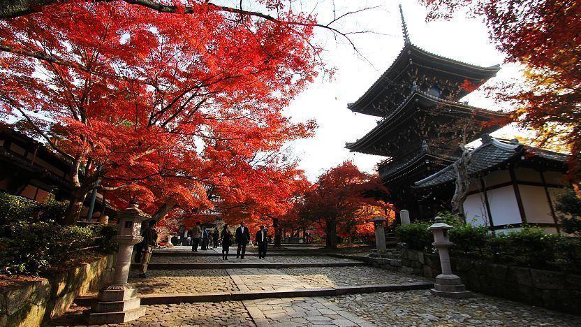 Tempat Melihat Bunga Sakura Rahasia di Kyoto